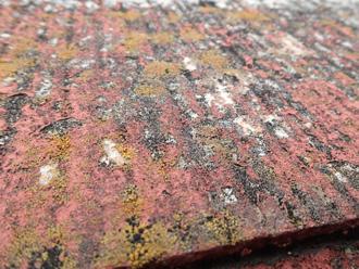 文京区 屋根のスレート表面には苔の発生が見られる