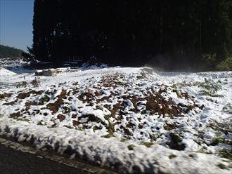 墨田区 雪解け