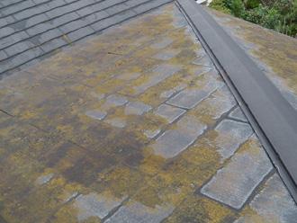 墨田区 屋根カバー工法前の屋根点検 苔が生えている