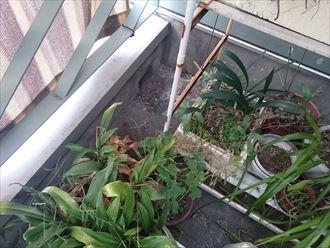江戸川区雨漏り対策防水調査002