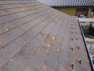 中野区 屋根全体にカビが生えている