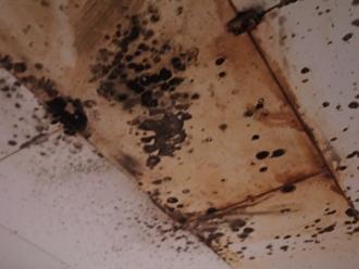 カビの生えた天井