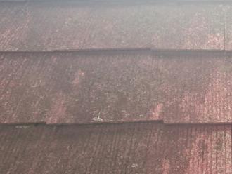 調布市 スレート表面に苔が生えている