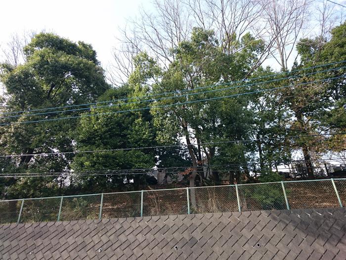 木々の多い地域