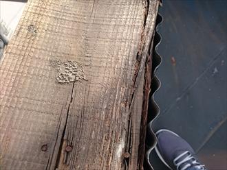 笠木が外れて剥き出しになった下地