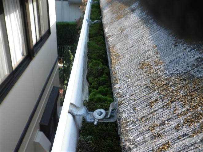 雨樋が詰まってコケがビッシリ