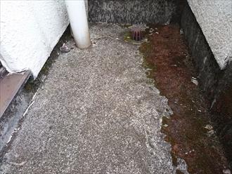 バルコニーの床のモルタルにはコケが生えています