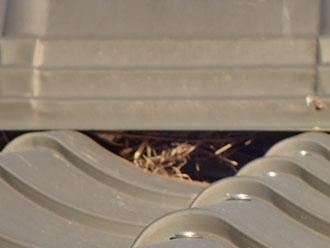 東久留米市南町で屋根からの異音、鳥が巣を作っていました