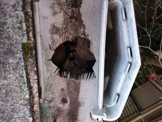 雨樋に葉っぱが詰まっています