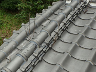 棟から植物が生えている瓦屋根