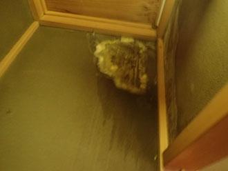 雨漏りのせいでカビの発生した室内の壁