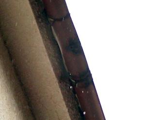 雨樋から滴り落ちている雨水