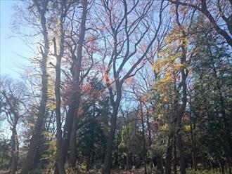 木が近くにあると良いのですが落ち葉が気になります