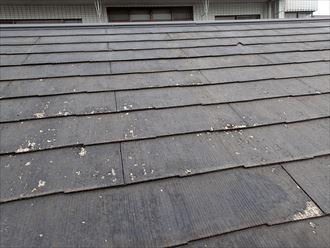 文京区千駄木で20年前に塗装をされたコロニアル屋根の点検を行いました