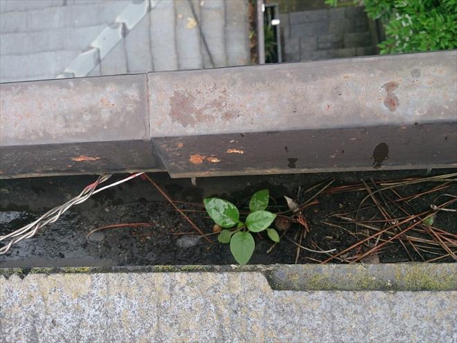 松などの細い葉の場合はネットの隙間から入ってしまいます