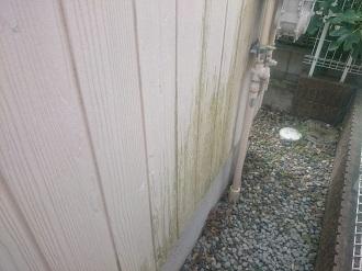 外壁に生えた苔