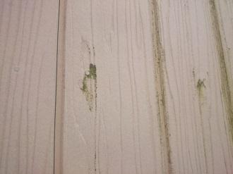 釘穴周辺に生えた苔