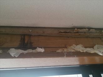 壁のボードを剥がすと下地が腐食しています