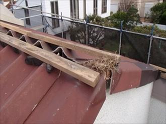 棟を外すと鳥の巣の跡がありました