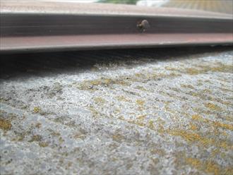 下地に貫板が腐食していて棟板金が浮いています