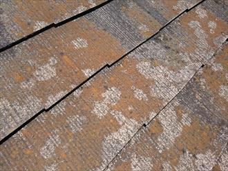 苔とカビが付着したスレートの表面
