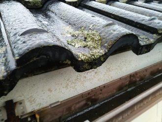 セメント瓦に藻
