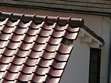 お隣の屋上から被害状況を確認します