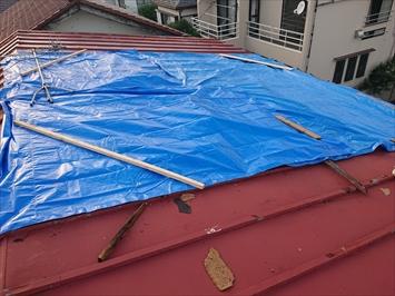 捲れた部分にブルーシートをかぶせて雨水の浸入を防ぎます