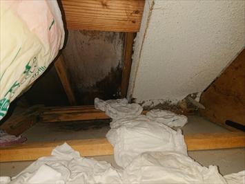 元の壁のモルタルを剥がして新しい屋根を造っています