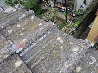 苔や藻の発生が見られるセメント瓦