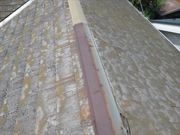 勾配が緩いので屋根に上れました