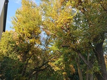 木に囲まれているので雨樋に落ち葉除けネットを設置します