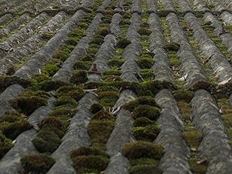 苔の生えたスレート