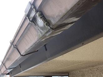 雨樋の外側にも苔が付着