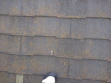 屋根のあちこちに欠片が落ちています