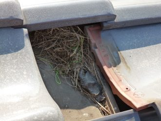 鳥の巣です