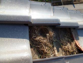 瓦の下の鳥の巣