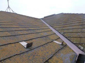 黄色く苔の生えた屋根