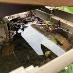 落ち葉が堆積した雨樋