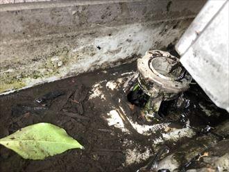 竪樋への接続周りを掃除