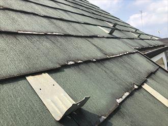 パミールの屋根全体像