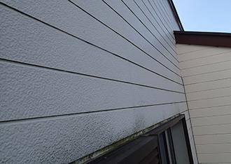 カビや苔による外壁の変色
