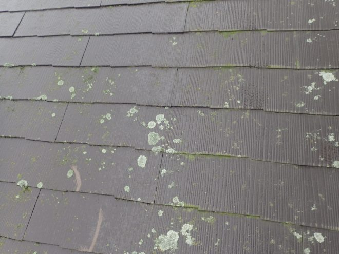 スレートに苔が生えています