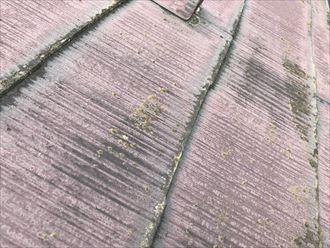 コケと汚れの発生したスレート屋根