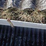 植物がはえた雨樋