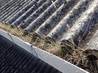 排水不良の原因は植物