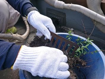 防水の切れ目から生えて草も除去します