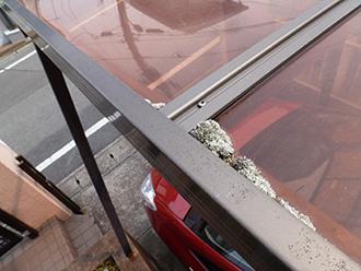 ポリカ屋根に苔が発生