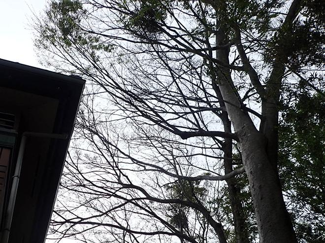 樹木が近い家