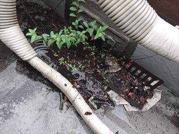 草が生えた屋上防水の排水口